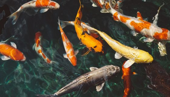 """""""אם אתם רוצים לתפוש יותר דגים, תלמדו לחשוב כמו אחד"""""""