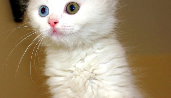 חתול קטן